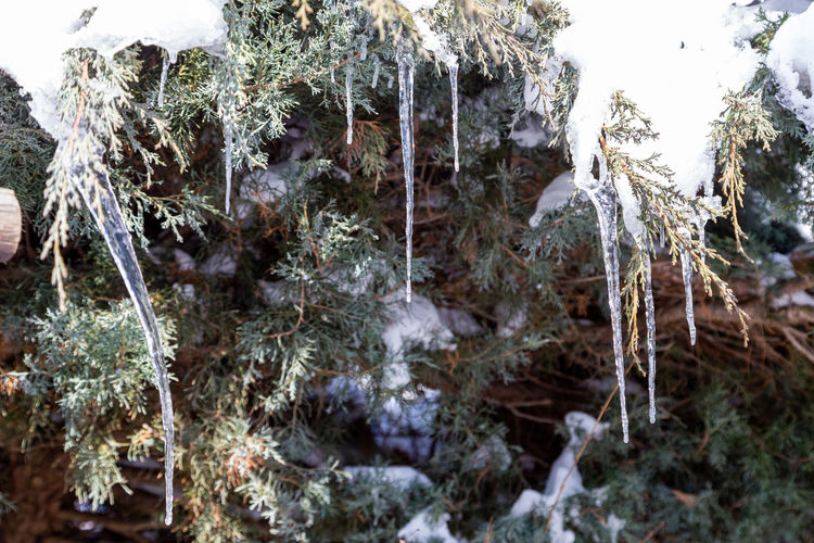 Close-up of frozen trees in forest during winter