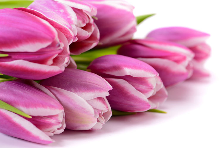 bunch of colorful tulip flowers Easter Greeting Holiday Nature Plant Valentine's Day  Arrangement Beauty In Nature Birthday Blooming Blooming Flower Blossom Bouquet Bouquet Of Flowers Bouquet Of Tulips Bunch Bunch Of Flowers Bunch Of Tulips Color Decoration Flowers Gift Mothersday Present Studio Shot