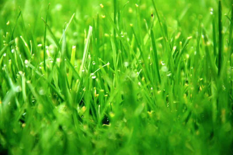 Morgentau Grass Früh Am Morgen Morning Green Grün Wasser Wassertropfen Tropfen Tau Reif Morgenreif Garten Garden Rasen Nikonphotography