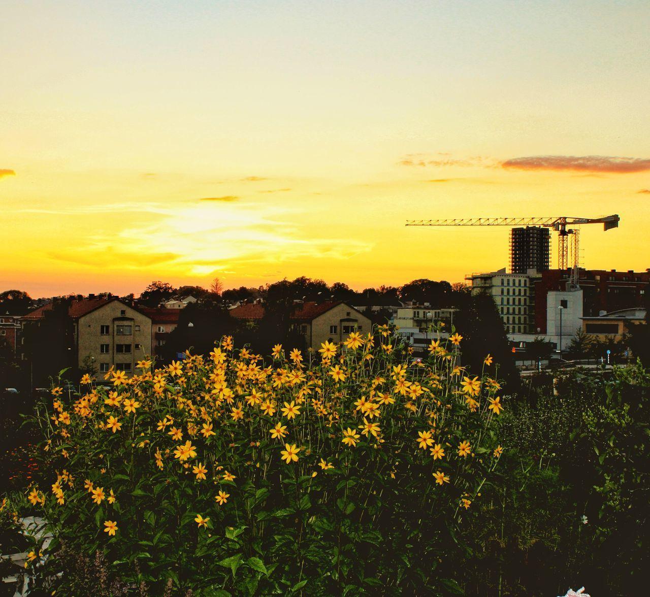 SCENIC VIEW OF YELLOW AND ORANGE SKY