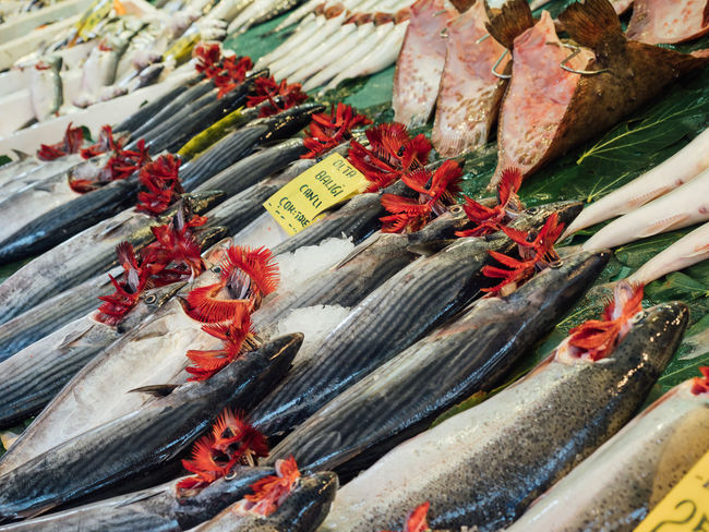 Freshness Istanbul Market Open Up  Turkey Abundance Choice Fish Fishes Food For Sale Freshness Gills Local Market Market Raw Food Retail  Retail Display Sale Seafood Selling Sky uniqueness Variation Wet Market