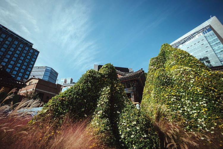 Flower mountains Building Exterior Built Structure Architecture Low Angle View Sky Growth Tree City Outdoors No People Skyscraper Mountain Hill Green Urban Landscape Seoul Korea Buddhist Temple ASIA Asian Culture Cityscapes Temple - Building Manmade Mountain Peak Installation Art