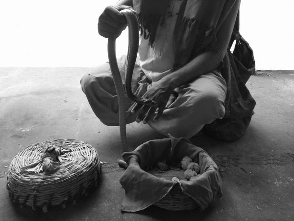 Is India a country of snake charmers, as a lot of people believe or is it a country that is modern in it's thought & approach? EyeEm EyeEm Best Edits EyeEm Best Pics EyeEm Best Shots EyeEm Best Shots - Black + White Eyem Best Sellers EyeEm Masterclass EyeEm Outdoors EyeEm Selects EyeEm Best Photography EyeEm Gallery EyeEmBestPics Snake Snake Charmer Day Eye4photograghy EyeEm Mobile Photography Eyeem India Eyeem Monochrome Eyeem New Talent Human Hand One Person Outdoors EyeEmNewHere Eyeemindia