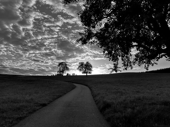 Black & White Evening Light Sunlight Beauty In Nature Blackandwhite Cloud - Sky Diminishing Perspective Evening Atmosphere Evening Sun Field Growth Horizon Landscape Monochrome monochrome photography Nature Outdoors Road Scenics - Nature Sunset The Way Forward Tranquil Scene Tranquility Tree