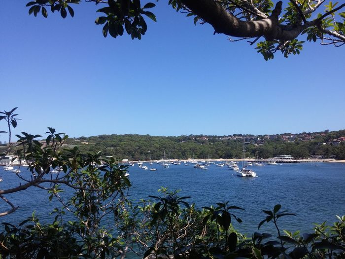 Adventure Club Bushwalk Through The Trees Great View Boats