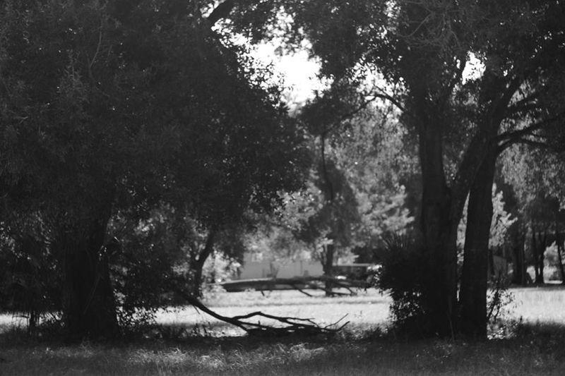 Places Beauty In Nature Florida Landscape, Trees Portrait Florida, Cassadaga Black And White
