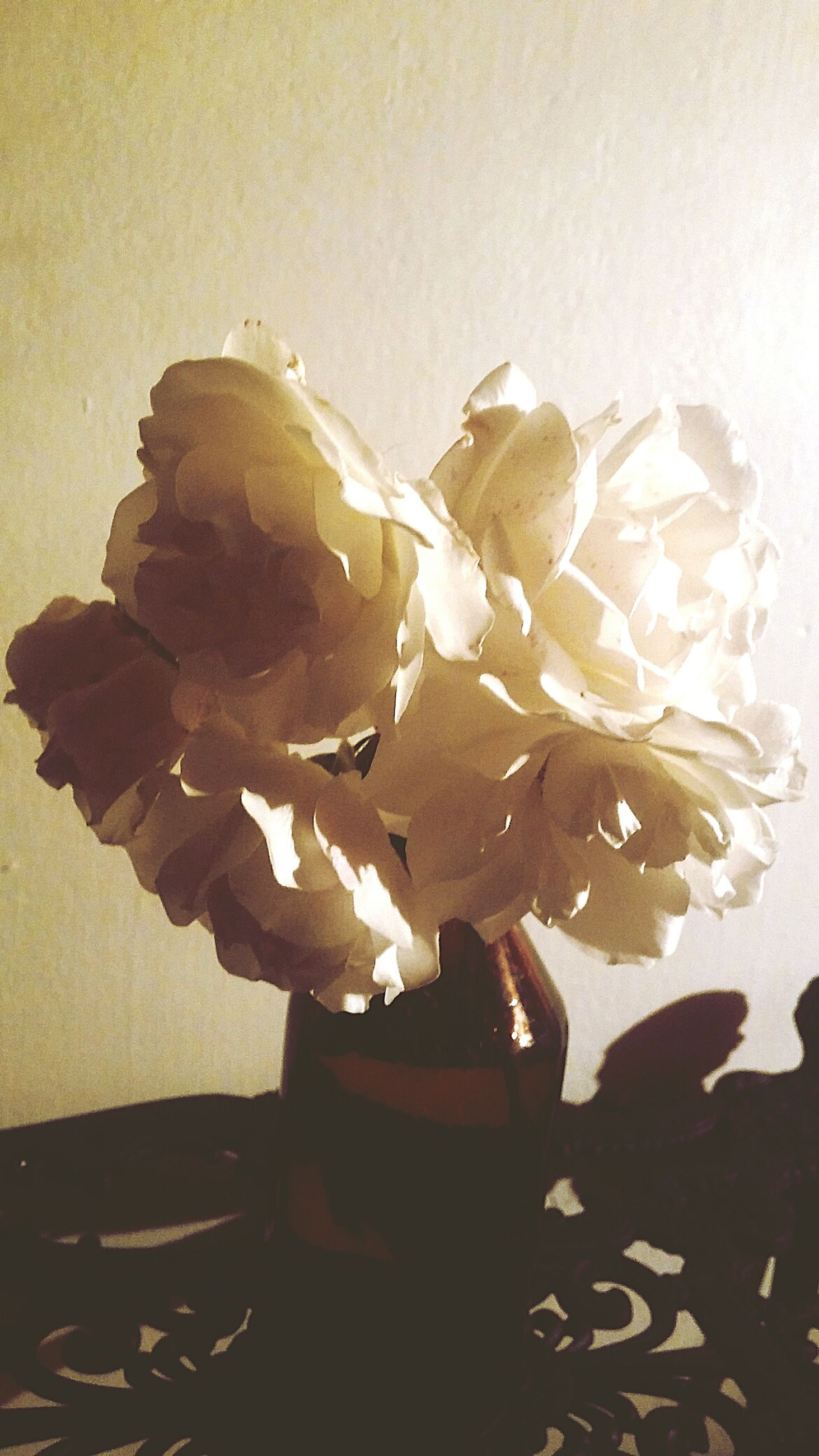 flower, petal, freshness, nature, fragility, beauty in nature, no people, flower head, vase, close-up, indoors, growth, day