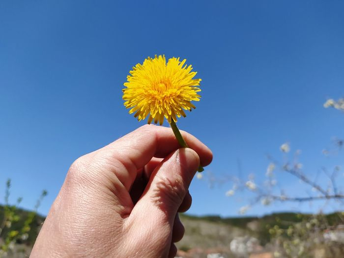 Dandelion in hand and sky backround