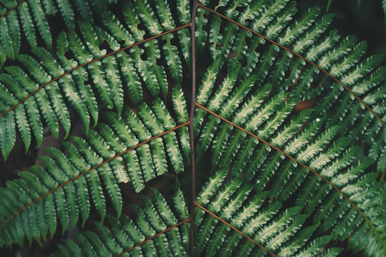 Fern foliage Dark green and cold detail leaf Growth Plant Leaf Plant Part Green Color Beauty In Nature No People Fern Close-up Full Frame Natural Pattern Nature Day Pattern Botany Backgrounds Outdoors Tree Tranquility Leaf Vein Leaves