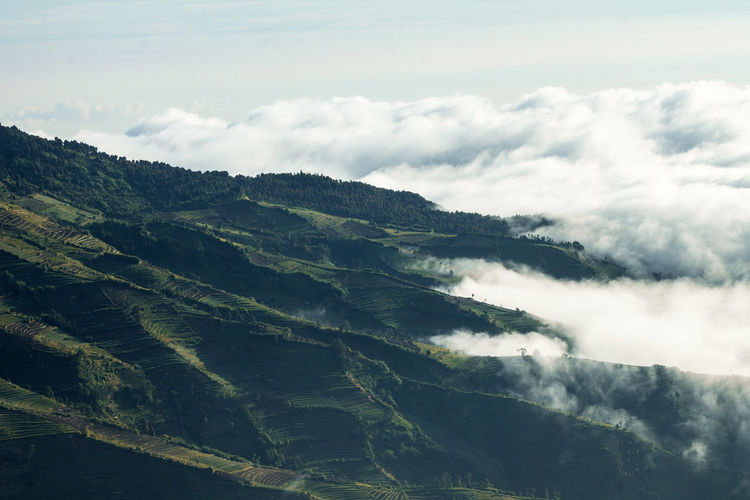 On the sky ☁☁ Nature Beauty In Nature Landscape Scenics Sky Tranquility Day Cloud - Sky Outdoors No People Tranquil Scene Tree Mountain Freshness Wonosobo Dieng Indonesia