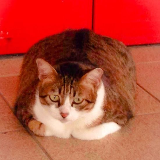 Just had lunch . How do you do ? Fat Cat/ Garfield 2.0 Cat Fat Cat Cat IPhone Neko