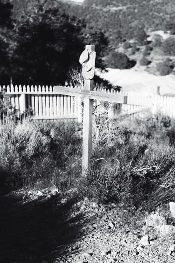 Cemetery Railing Day Tree Outdoors Plant No People Nature Saguaro Cactus Dark🌌 By Tisa Clark Dark Photography Black & White By Tisa Clark Darkness And Light Shadow Blackandwhite