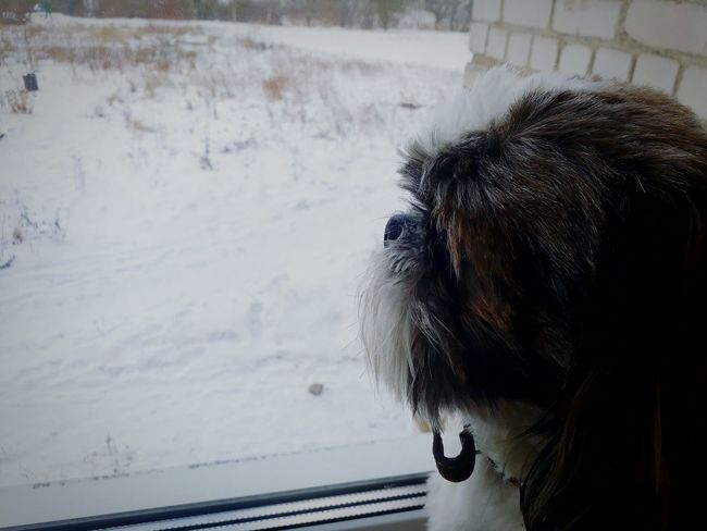 One Animal Dog Cold Temperature Winter Pets Day No People Nature Shi-tzu