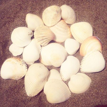 Sea Holiday Shells