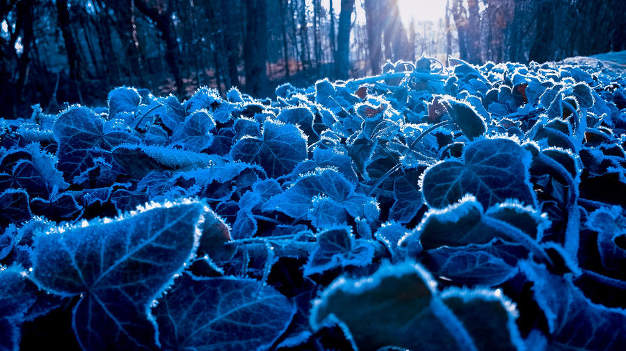 Close-up of frozen trees during winter