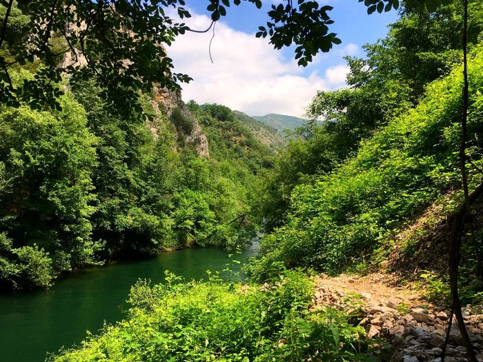 Macedonia FYROM EyeEmNewHere Nature EyeEm Nature Lover Sunny Cloud Formations Cloud Canyon National Park Natural Park Canyon Matka Matka Matka Canyon Lake Hiking Tree Water Branch Sunlight Forest Leaf Sky Plant Green Color