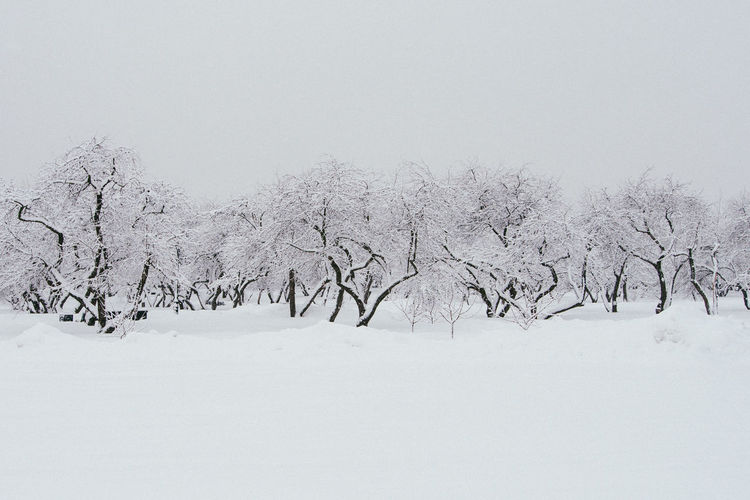 Snow Cold Temperature Winter Tree Beauty In Nature Tranquil Scene Plant Scenics - Nature White Color No People Tranquility Land Nature Sky Environment Day Covering Landscape Copy Space Snowing
