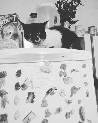 Cade o gatinho da mamãe? 🤔💙🤗 Cat Catstagram Cute Love Beautiful Catsofinstagram Instacat Kitty Cats Pet Petstagram Instagram Longhairdontcare Instalike Instalove Theatre Shoegasm Ilovemycat Killer Igtravel Instagood Sweet Drive Summer Calum gato flowers korean wednesday fluffy