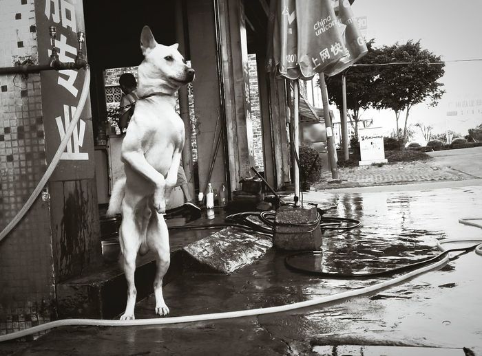 hi~my puppy,stand up!😃Walking Around My Home Town! Taking Photos Outside EyeEm Best Shots - The Streets Street Photography Doggy Passing By Shot