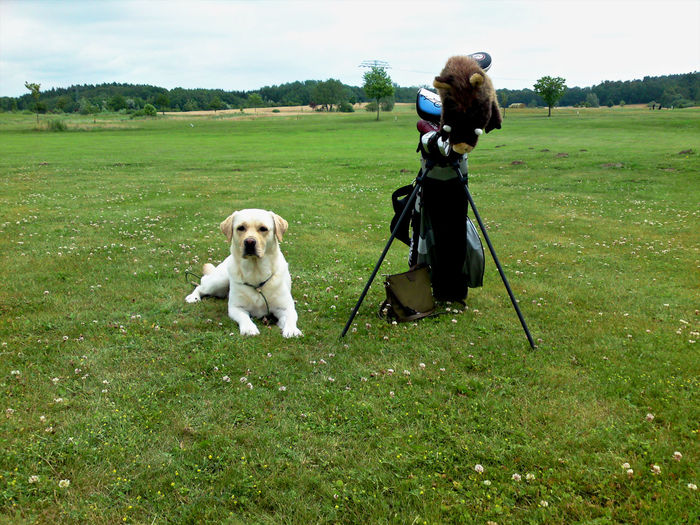 Portrait of dog sitting at golf course