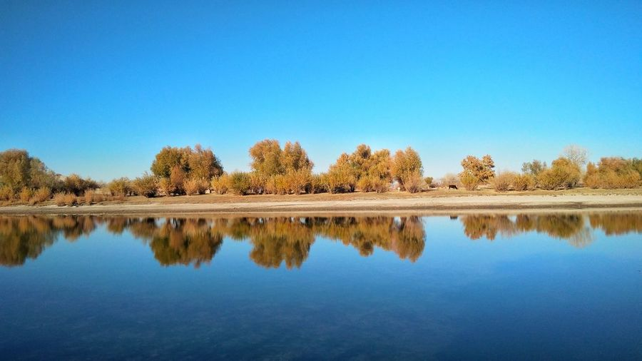 Tree Water Clear Sky Blue Lake Reflection Symmetry Sky