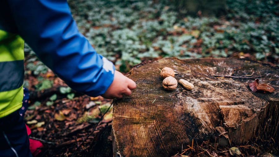 Close-up of cildrens hand putting nuts on tree in forest
