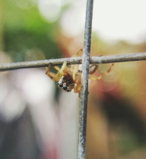 8legged friend. Close-up Outdoors Rusty Eyeem Philippines EyeEm Vision EyeEmNewHerе Spider Eyes Little Spider