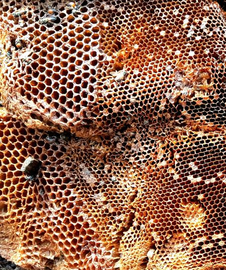 Check This Out Eyeem Photography EyeEm Bee Hive Architecture Honeycomb Beewax Hexagonal Honey Empty Room Honey Bee