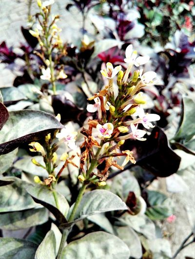 Bloom ! Flower Nature Growth Plant Outdoors Beauty In Nature Day Blossom No People Close-up Freshness Flower Head Fragility Photography Themes Mobilephotography Urban Photography Photography Personal Perspective