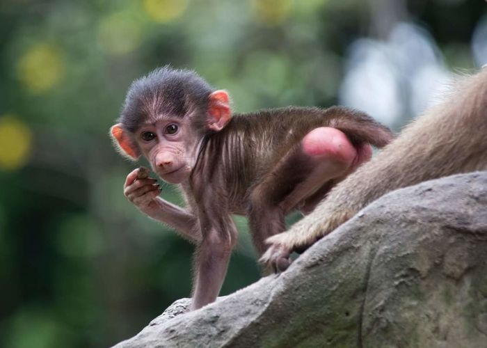 Portrait of young monkey on rock