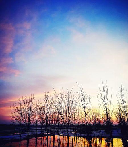 Huawei Huawei P9 Lite Huawei P9 Lite 2017 Tree Wintertime Blue Sky Water Sunset Flying Silhouette Sky Romantic Sky Atmospheric Mood Moody Sky
