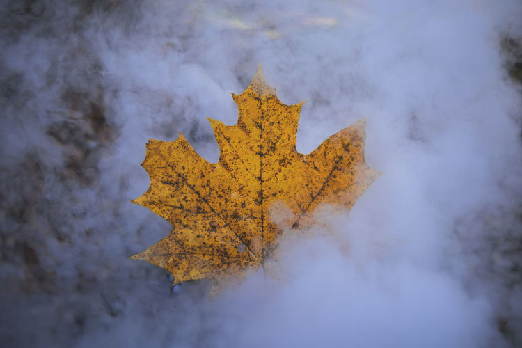 High angle view of maple leaf against sky