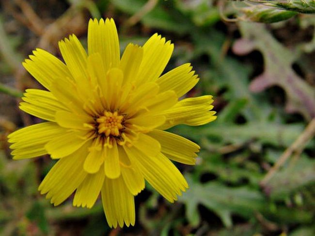 Flowers Yellow Yellow Flowers Oregon Coos Bay Check This Out Wildlife Explore Nature Tumblr
