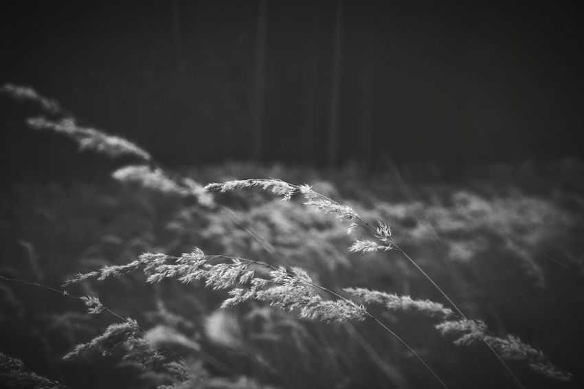 Monochrome Black & White Black And White Blackandwhite Grass Uncultivated EyeEm Nature Lover Nature Photography Nature Forest Close-up Plant