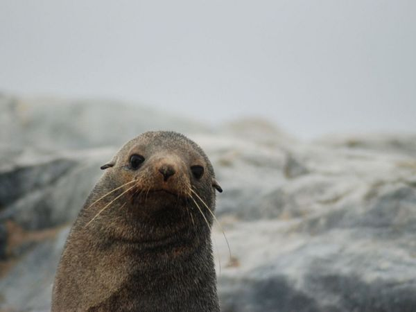 Traveling In Antartica
