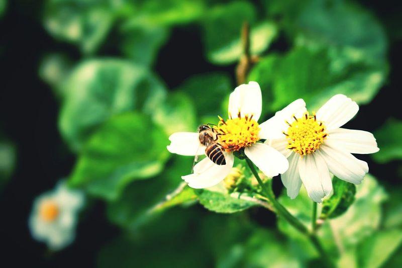 春天,採蜜。 EyeEm