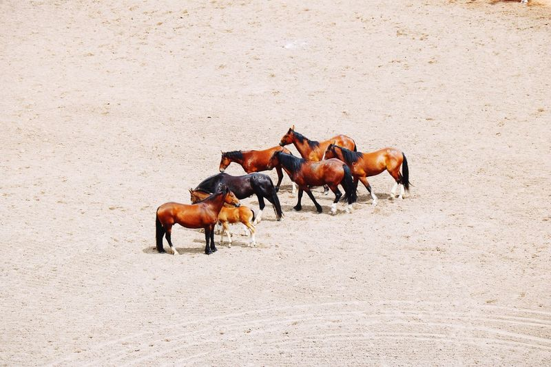 EyeEm Selects horses Horse Animal Themes Domestic Animals Sand Horseback Riding Outdoors Mammal Day Togetherness No People Nature Sommergefühle