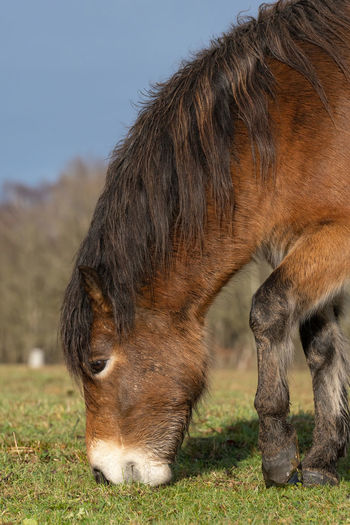 Close-up of a horse grazing