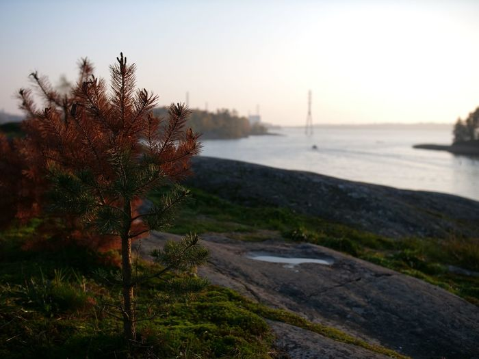 Small glimpse of autumn colours Gh5 Tranquility Green And Brown Autumn Colours Day Orange Color Non-urban Scene Sunset Growth No People Sea Water Nature Sky Tree Autumn Outdoors Plant Finland Clear Sky Cliffs Beauty In Nature Tranquil Scene Scenics - Nature