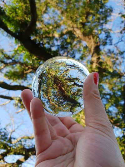Lensball Photography Human Hand Tree Holding Personal Perspective Human Finger Close-up Sky Crystal Ball Blooming Leaves The Bigger Picture Sphere Velvet Bauble Marbles Crystal Paranormal Growing