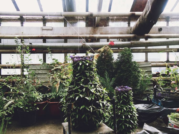 EyeEm Nature Lover In The Greenhouse Plants My Work Russia
