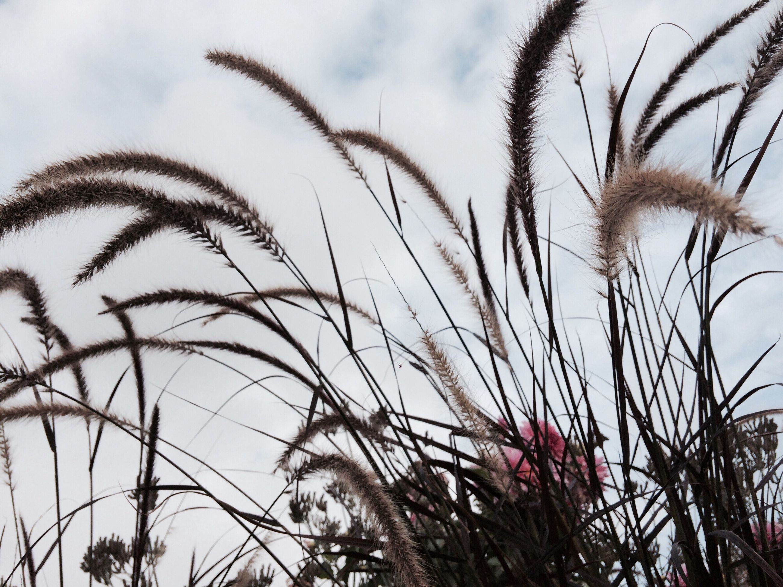 sky, growth, nature, low angle view, no people, flower, cloud - sky, tree, outdoors, plant, day, close-up, beauty in nature