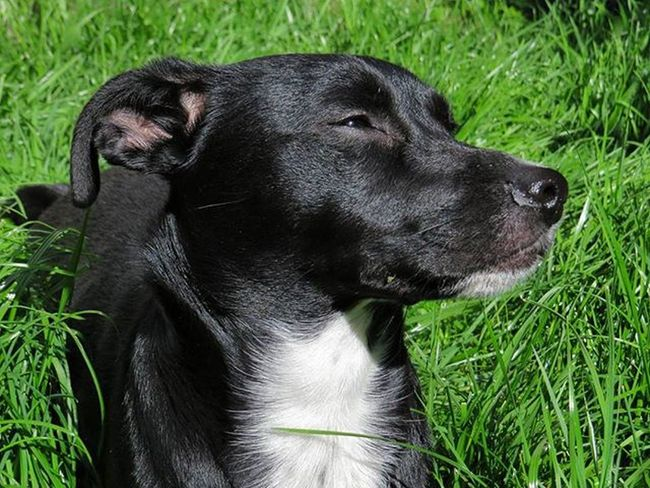 Chilling in the Sun ☀Dogemma Dog Hund Dogofinstagram Dogstagram Dogs Dogoftheday Dogmodel Lovelydog  Lovelydogs Pet Pets Petstagram Petsofinstagram Petsoriginal Cute Animal Animalfind Animallovers