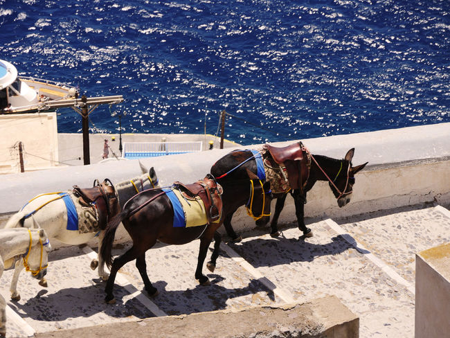 DonkeyB Tourism Greek Style Greek Tourism Turism Turismo Donkeys Greek Islands Water Reflections Animal Themes Day Eyem Gallery Horse Sunlight The Week On EyeEm Been There. BeenThereDoneThat Been There Working Animal Outdoors Domestic Animals