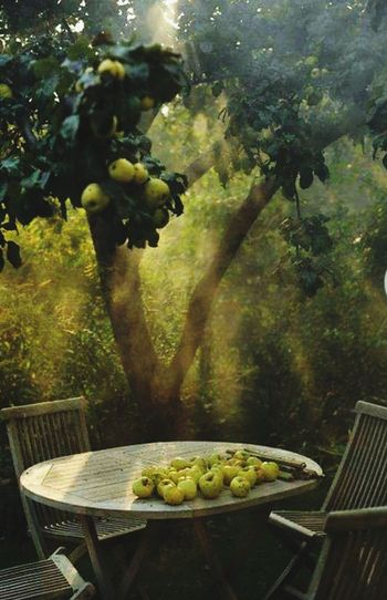Aples Healthy Eating Fruit No People Vegetable Olive Outdoors Day Green Color Freshness Agriculture Tree Rural Scene Nature Sun Light Through Trees Sun Ligth Table And Chairs Natural Apple Trees Garden nerede Sapanca