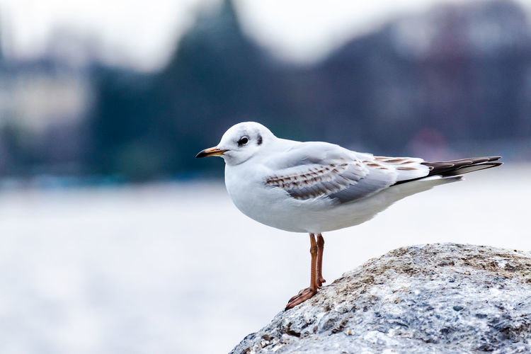 Seagull perching against sky