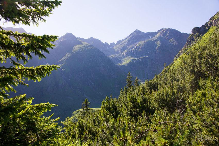 Peak Negoiu, Transylvania Beauty In Nature Clear Sky Day Freshness High Mountain Nature No People Outdoors Peak Range Scenery Sky Tree