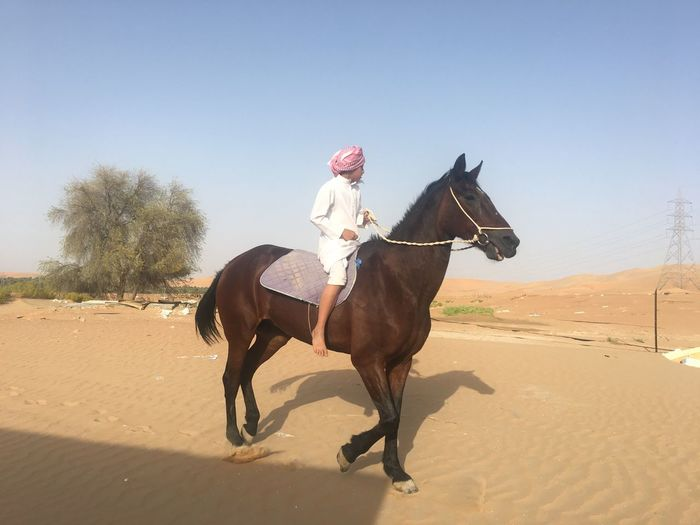 Mammal Domestic Animals Ride Riding Livestock Domestic Vertebrate Animal Wildlife Pets Horseback Riding Horse Nature Outdoors Sky