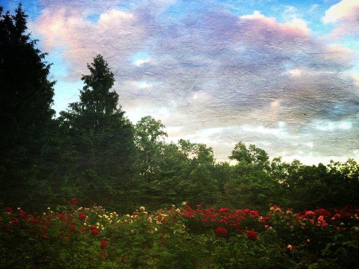 NEM Landscapes