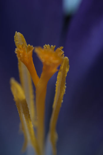 Flower Flowering Plant Freshness Plant Petal Vulnerability  Fragility Beauty In Nature Growth Close-up Flower Head Inflorescence Nature No People Spring Springtime Spring Flowers Colors Freshness Growth